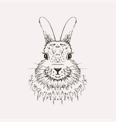 rabbit sketch hand drawn vector image