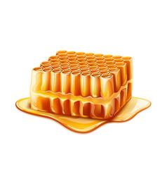 realistic honeycomb slice with liquid honey vector image