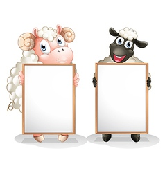 Two sheeps with empty boards vector