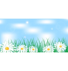 camomile in grass vector image