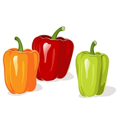 Colored pepper vector