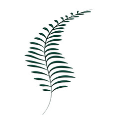 rustic exotic branch plant with leaves vector image