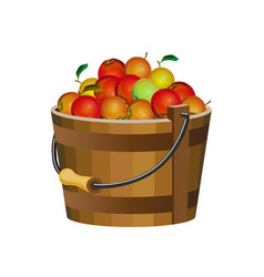 wooden bucket with apples vector image
