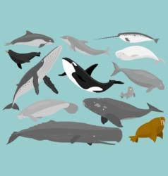 Marine Mammals vector image