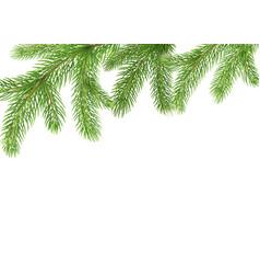fir branches border christmas tree frame pine vector image