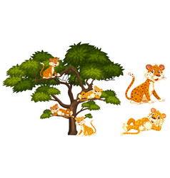 Many tigers relaxing on branches vector
