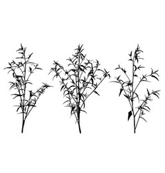 set of wild herbs silhouettes vector image