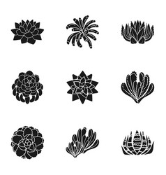 Succulent botany icon set simple style vector