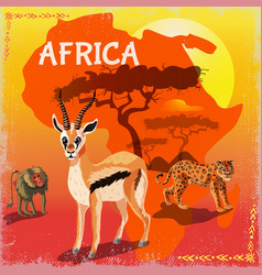 cartoon african fauna template vector image vector image
