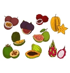 Fresh tropical fruits sketch icons vector image