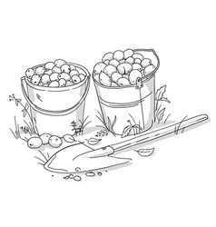 two buckets potatoes and a shovel autumn vector image