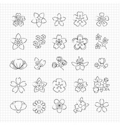pencil drawing blossom flowers vector image vector image