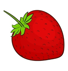 Strawberry berry vector image