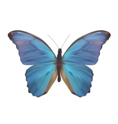 Blue Butterfly Isolated on White Realistic vector image