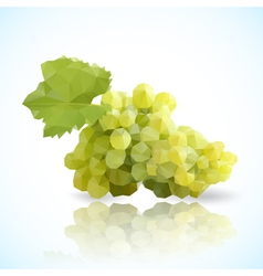 grapes triangle vector image
