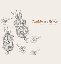 sandalwood flowers for funeral vector image