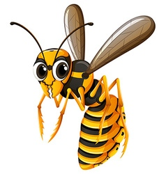 Wasp flying on white background vector image