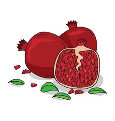 Isolate ripe pomegranate fruit vector