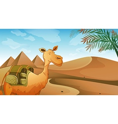 A camel at the desert vector