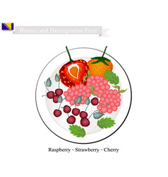 Raspberry strawberry and cherry fruits of bosnia vector