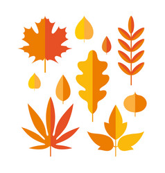 set bright autumn leaves in flat style vector image