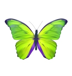 Green Butterfly Isolated on White Realistic vector image vector image