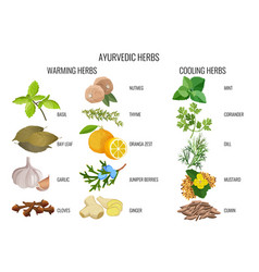 Ayurvedic warming and cooling herbs banner vector