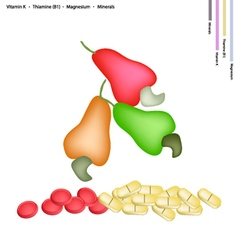 Fresh Cashew Nut with Vitamin K and B1 vector