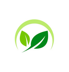 green leaf organic nature logo vector image