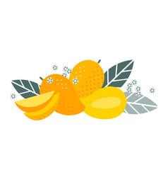 mango tropical exotic whole cut fruits leaf flower vector image