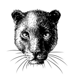 Panther graphic sketchy black and white portrait vector