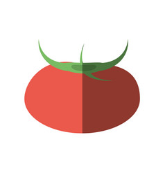 tomato nutrition food shadow vector image