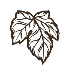 hop leaf object in engraving hand vector image