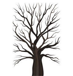 old tree without leaves vector image