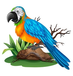 Parrot with blue and yellow feather vector
