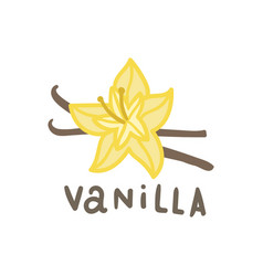 Vanilla superfood isolated on white vector