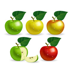 apple set vector image vector image