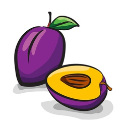 Plum fruits sketch drawing vector image