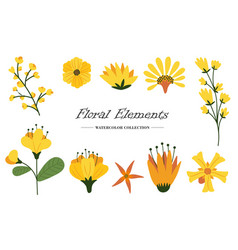 floral elements collection with different species vector image