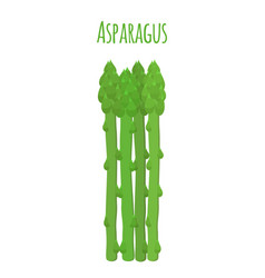 Green asparagus butch of ripe asparagus sprout vector