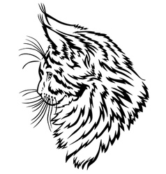 Maine Coon kitten vector image