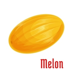 Melon fruit isolated icon for food design vector image