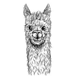 portrait alpaca cute lama ink sketch vector image