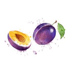 Watercolor plum vector