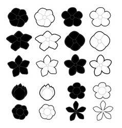 white and black flowers on a background vector image