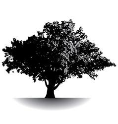 Gettysburg Tree vector image