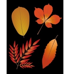 Autumn leaves on black background vector