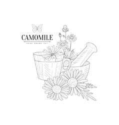 Camomile Tea Pestle And Mortar Hand Drawn vector