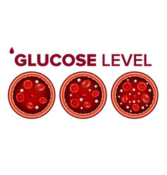Glucose sugar level in blood and red cells vector