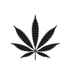 Marijuana or cannabis leaf vector